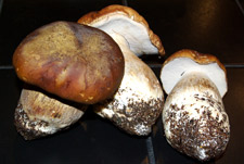 Three Boletes